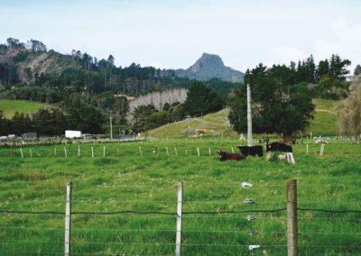 Rural-Coromandel
