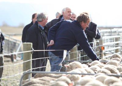 Sheepmarket